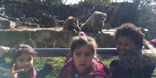 Excursión al zoo 5 años, 1º y 2º Luis Bello 29