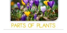 PRIMARIA 1º - CIENCIAS DE LA NATURALEZA - PARTS OF PLANTS