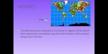 PRIMARIA - 5º - CONIFEROUS FOREST ECOSYSTEM - NATURAL SCIENCE