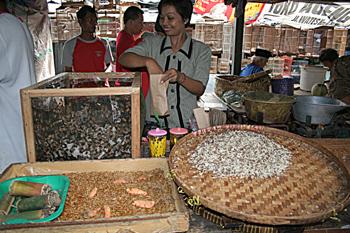 Comida de animales, Jogyakarta, Indonesia