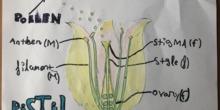 Hugo Amores Flower Project