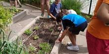 2019_06_07_Los alumnos de Quinto observan los insectos del huerto_CEIP FDLR_Las Rozas 10
