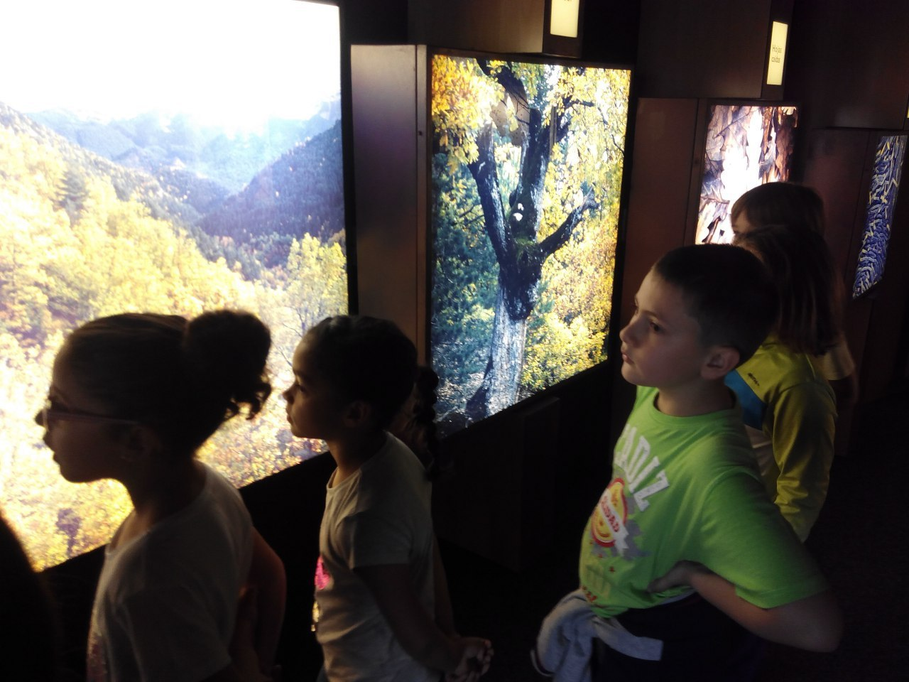 Visita a la exposición El Bosque. 1º 2º Primaria. CEIP Pinocho. 2016/17 12