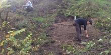 Plantación olmos ibéricos