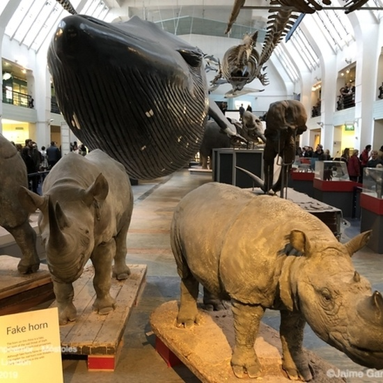 47 Natural History Museum #3