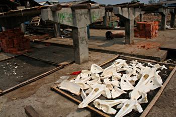 Huesos de pescado, Jakarta