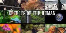 Effects of human activity