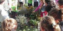 5º A en el huerto_CEIP FDLR_Las Rozas 4