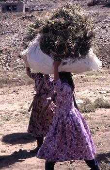 Dos mujeres trabajando en el campo, Yemen