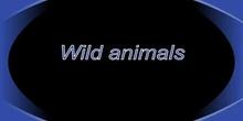 Wildanimals_editado