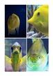 partes de los peces