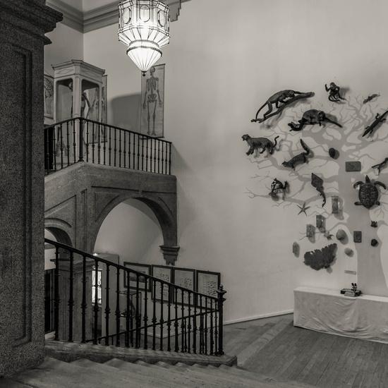 IES_SANISIDRO_MUSEO_038
