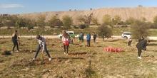 Plantación en el parque forestal de Valdebebas 2019 7