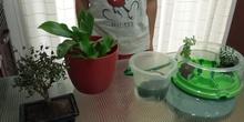 Ecosistemas acuáticos - Carla