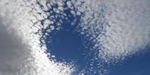 Imagen de nube: gato en movimiento