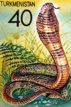 Cobra