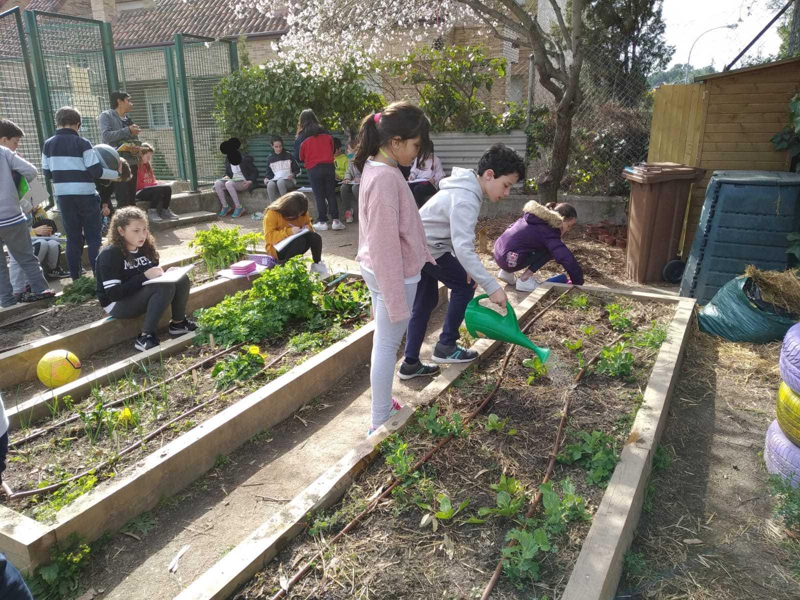 2019_02_24_Quinto termina febrero con las actividades de huerto_CEIP FDLR_Las Rozas_2019 4