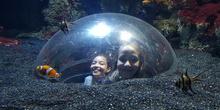 Aquarium Xanadú II 3ºB  18