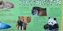 Proyecto animales en extinción 11