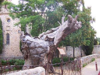 Olmo seco, Soria, Castilla y León
