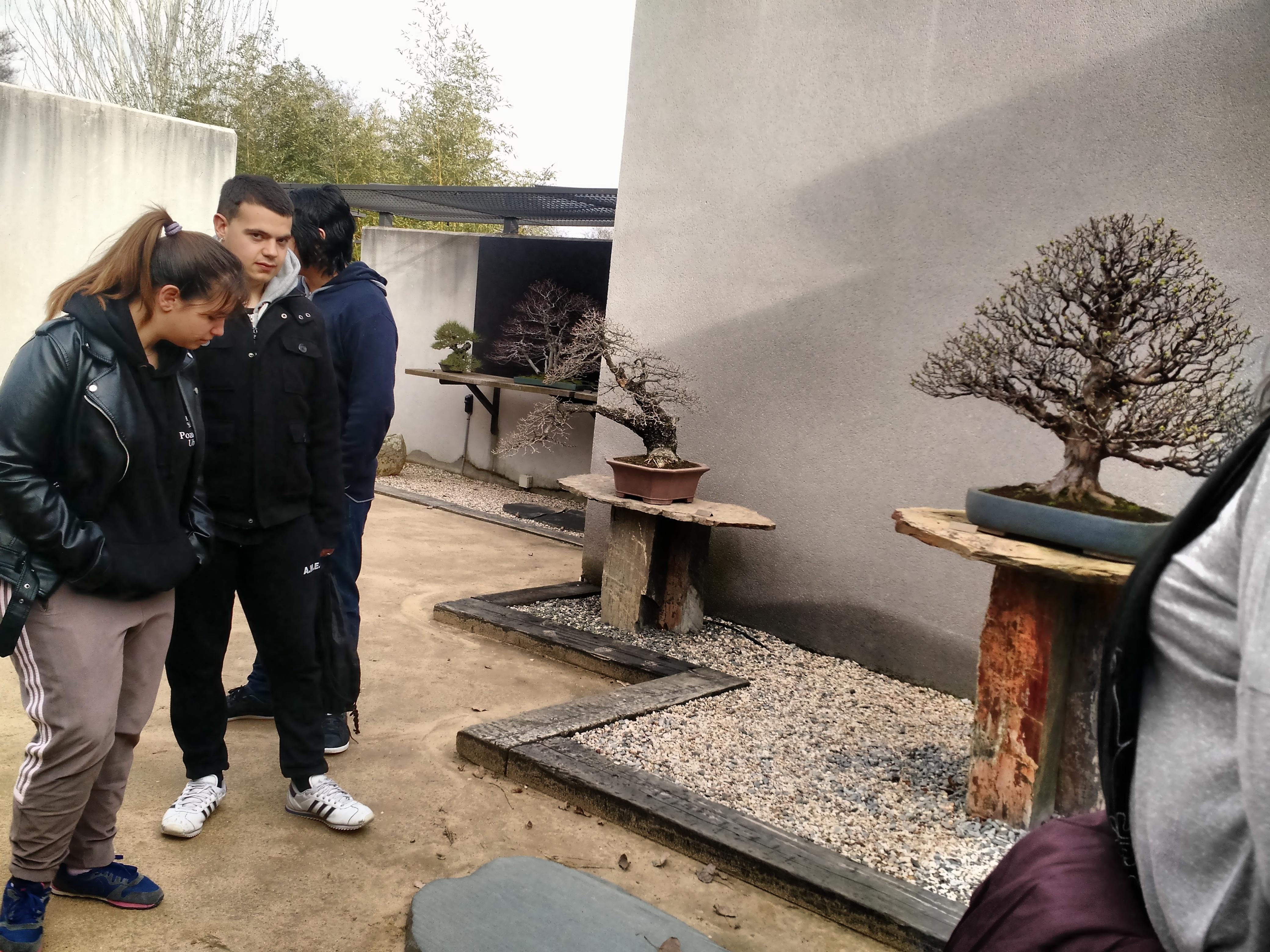 Museo del Bonsai 1