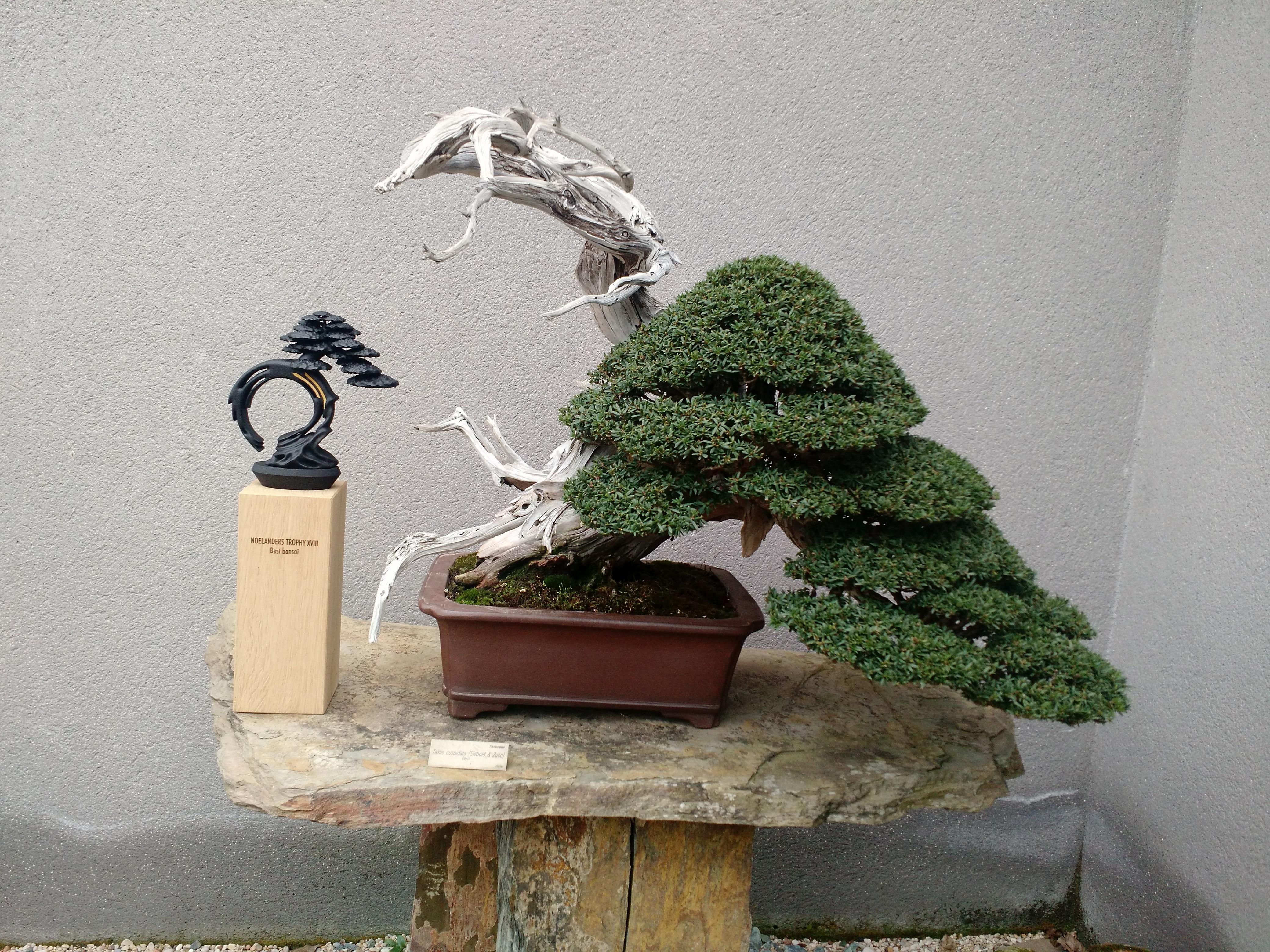 Museo del Bonsai 4