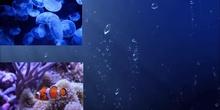 vídeo marino