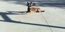 La Unidad Canina de la Policia Municipal de Las Rozas visita el cole_CEIP FDLR_Las Rozas_2017  3