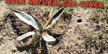 28049407 AULA DE LA NATURALEZA PRIMEROS PASOS