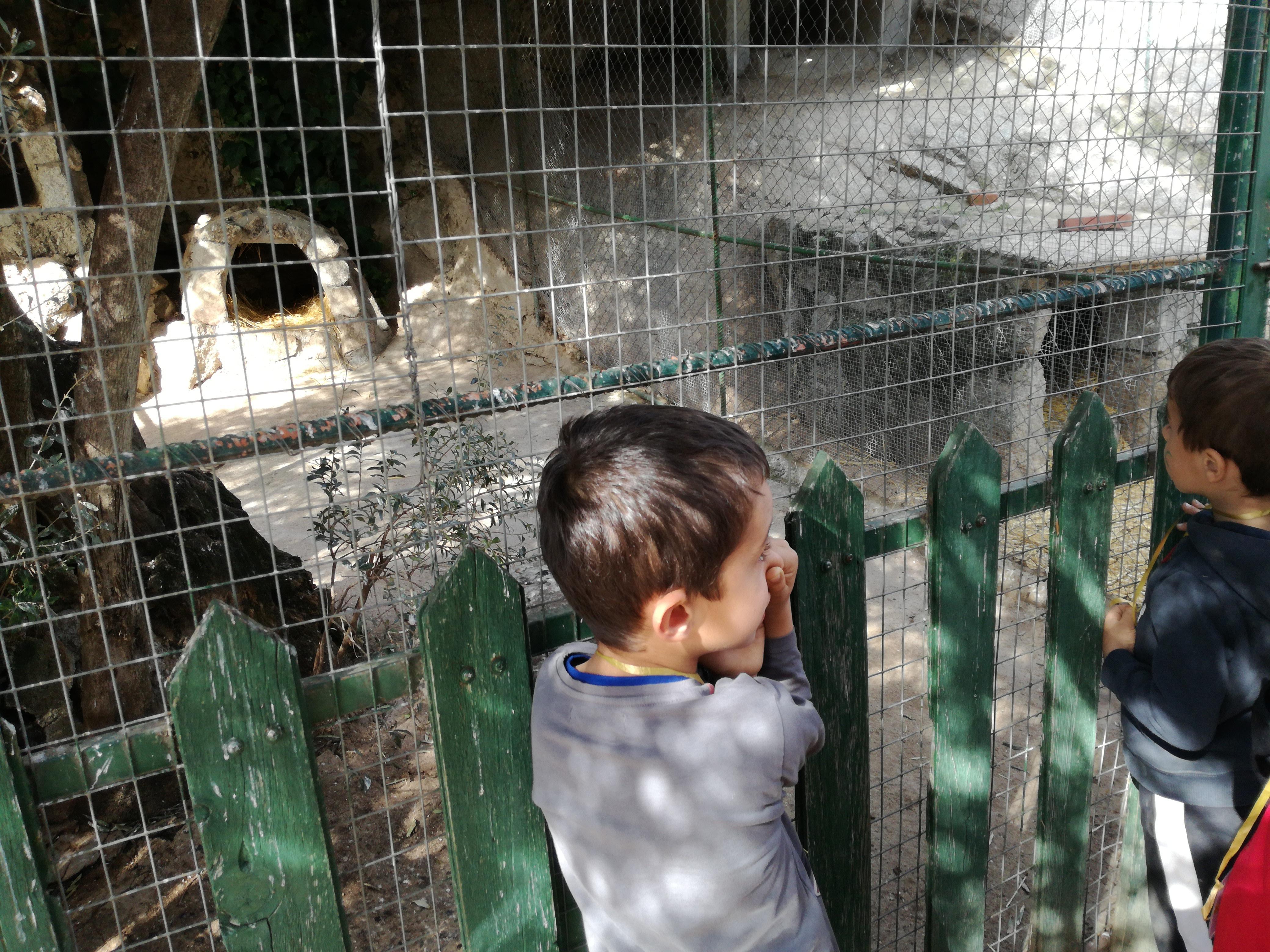 Infantil en la granja 18