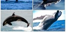 Partes de las ballenas