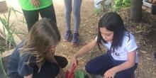 2019_05_Los alumnos de 4º en el Huerto_CEIP FDLR_Las Rozas 4