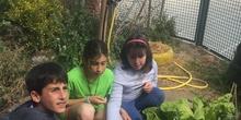 2019_05_Los alumnos de 4º en el Huerto_CEIP FDLR_Las Rozas 21