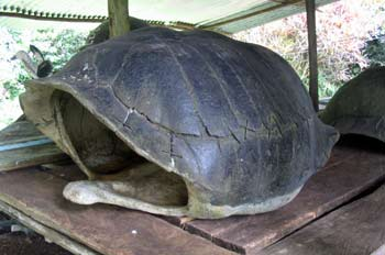 Caparazón de tortuga gigante, Ecuador