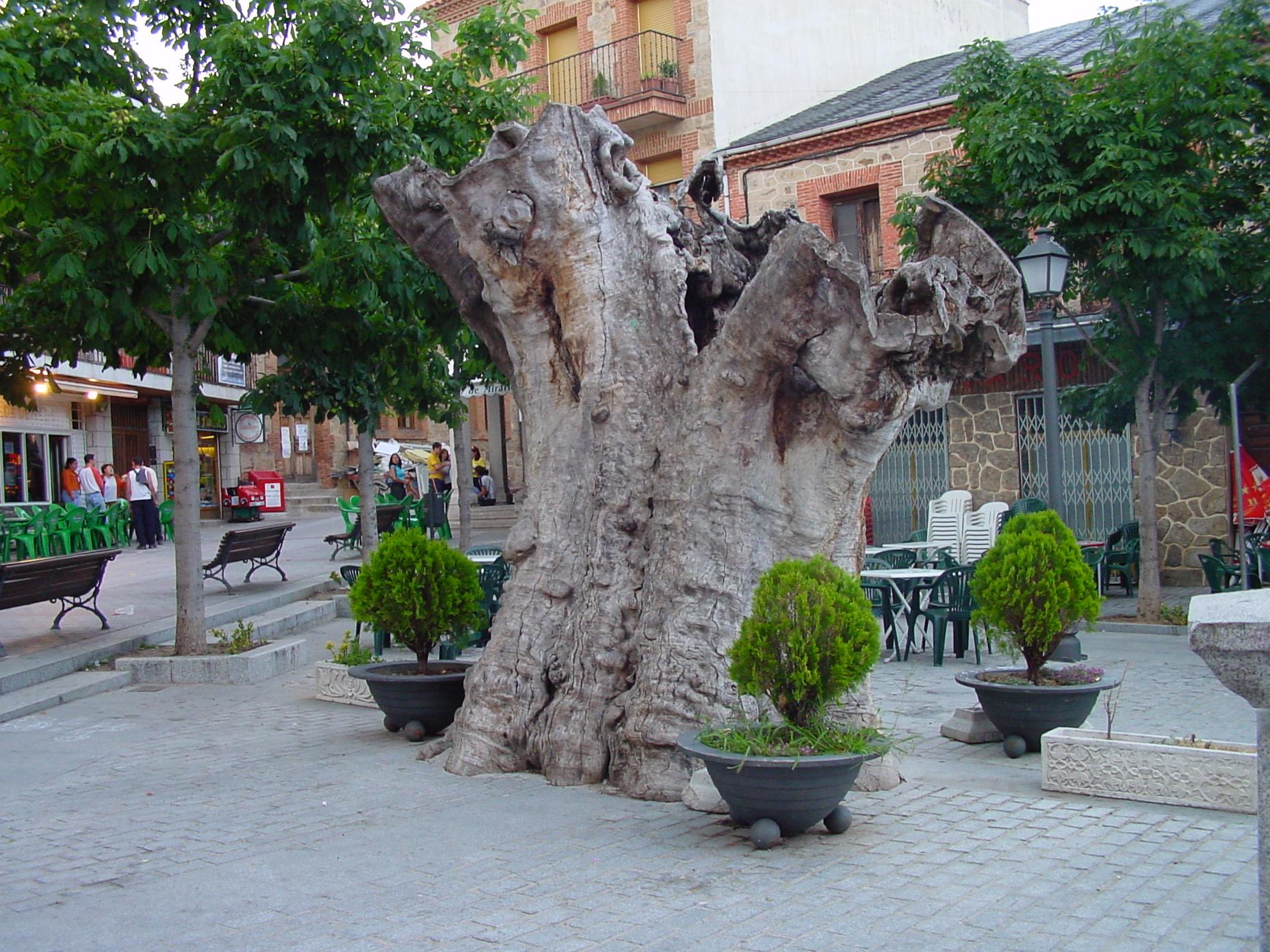 Plaza del Álamo en Miraflores de la Sierra