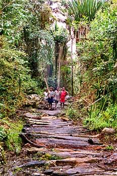Camino en selva creado con traviesas de madera, Irian Jaya, Indo