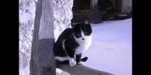 gatos en la nieve