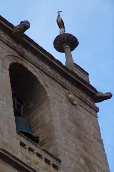 Cigüeña posada en un pináculo, Cáceres