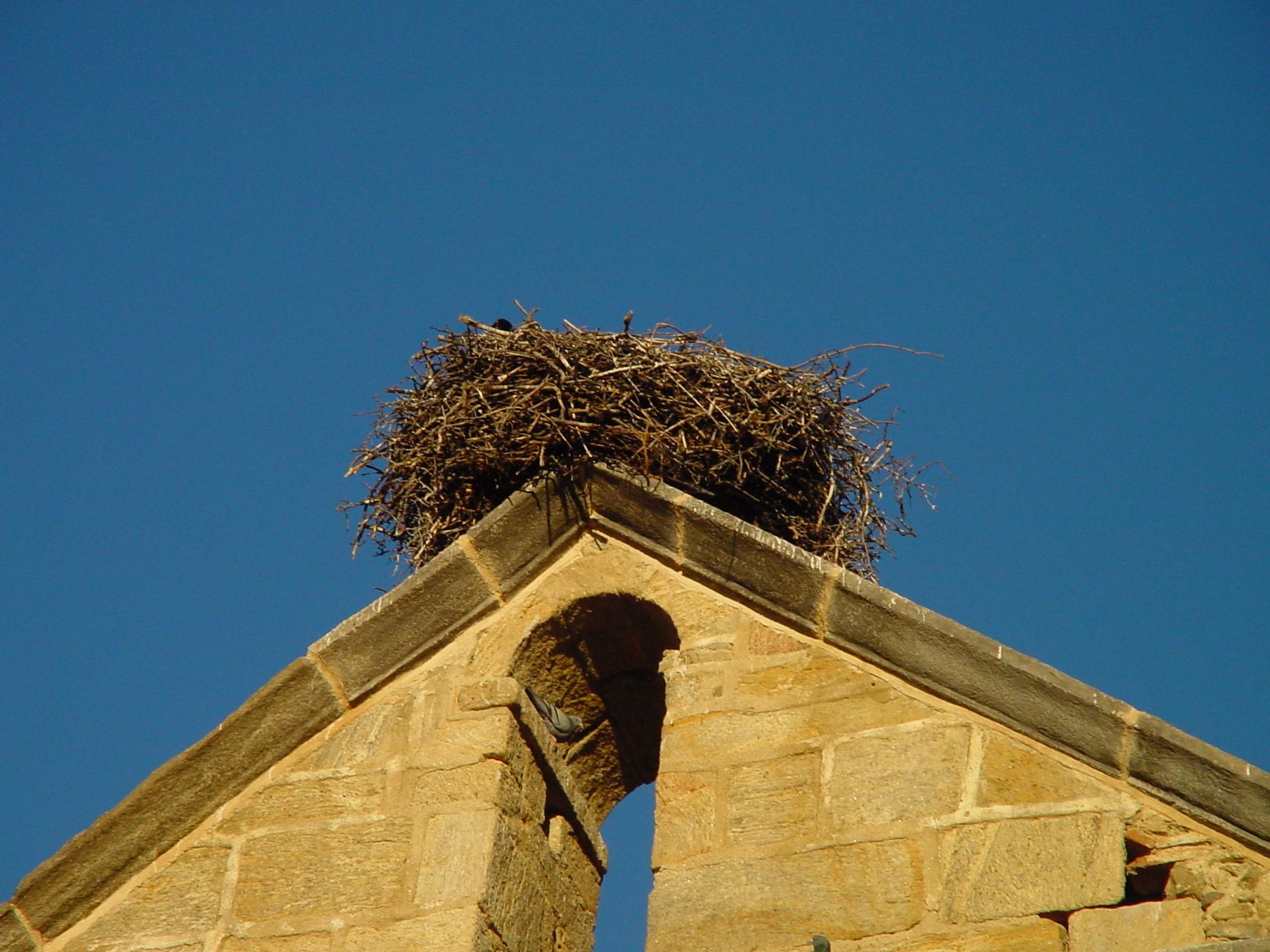 Nido en campanario de iglesia en Madarcos