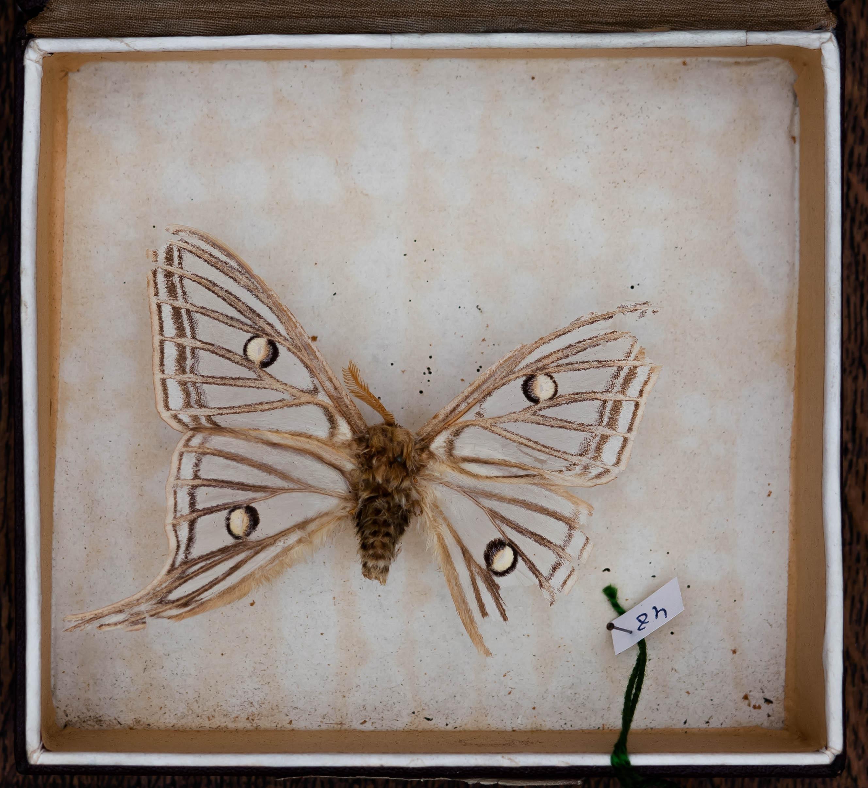 IES_CARDENALCISNEROS_Insectos_001