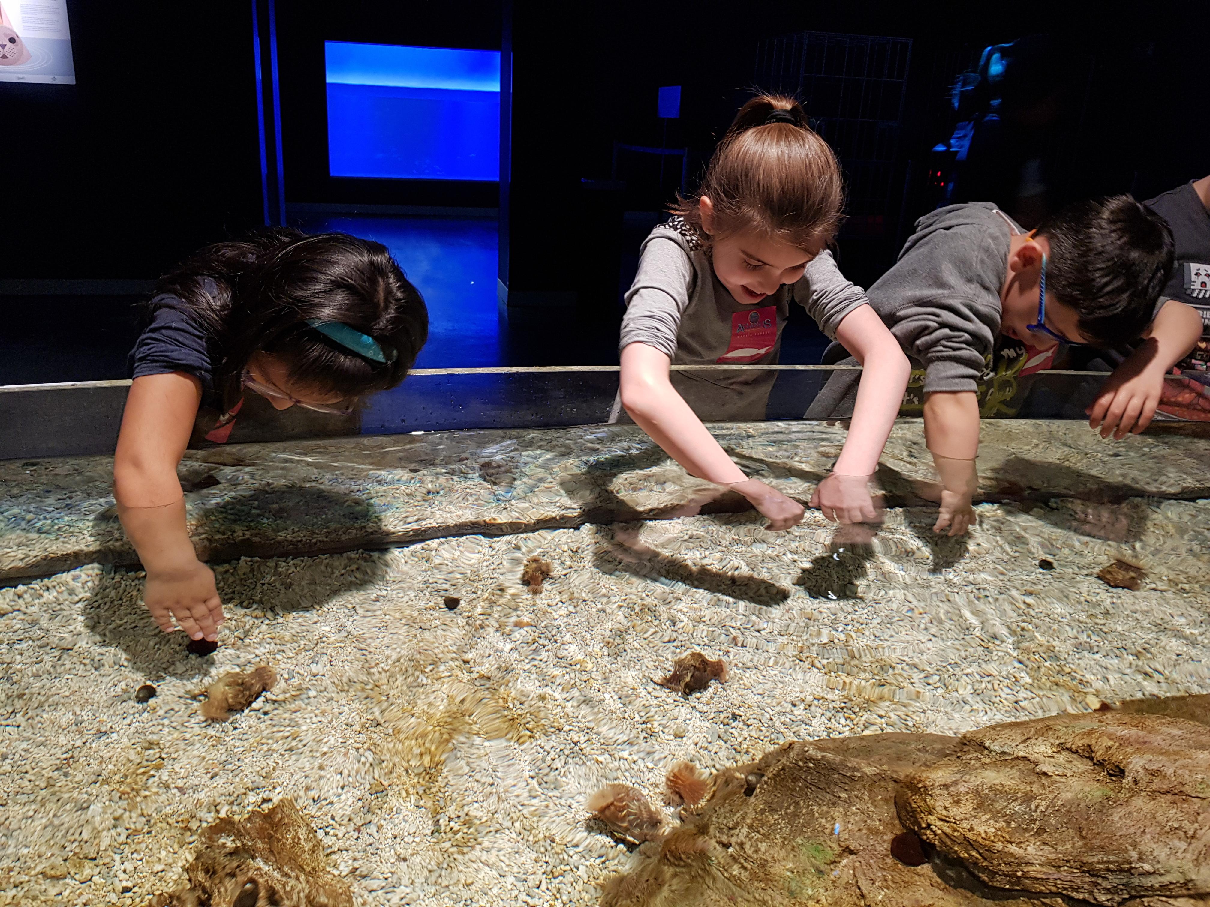 Fotos Aquarium Xanadú 3ºB 11