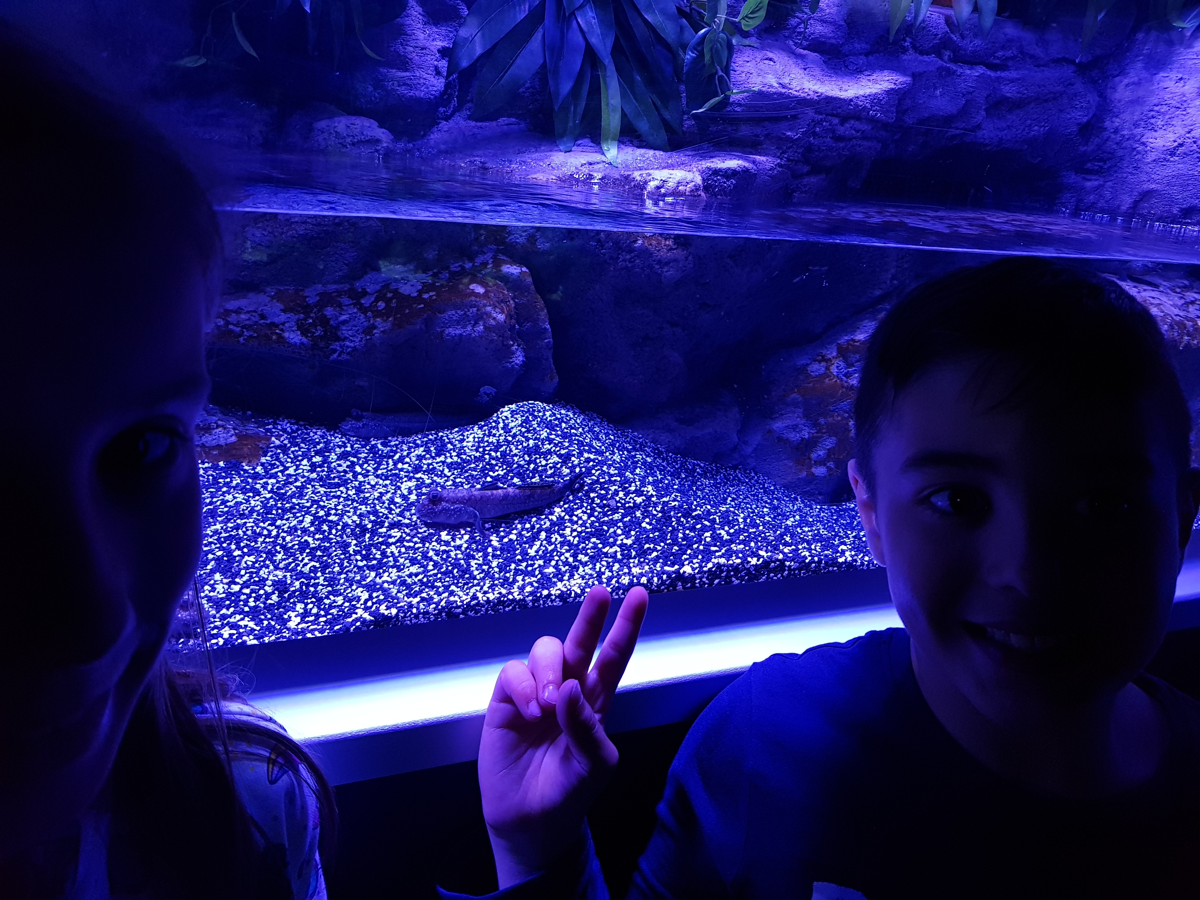 Fotos Aquarium Xanadú 3ºB 30