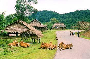 Carretera en Laos con vacas, Laos