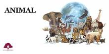 PRIMARIA 2º - LENGUA CASTELLANA Y LITERATURA - DESCRIBIR UN ANIMAL