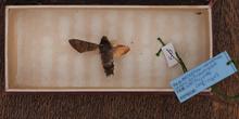 IES_CARDENALCISNEROS_Insectos_006