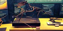 Dsungarypterus (Pterosauria), Museo del Jurásico de Asturias, Co