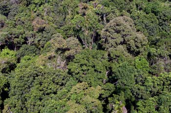 La selva en Queensland, Australia