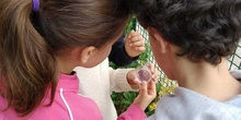 2019_06_07_Los alumnos de Quinto observan los insectos del huerto_CEIP FDLR_Las Rozas 2