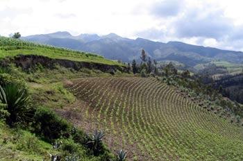 Cultivos en los alrededores de Otavalo, Ecuador