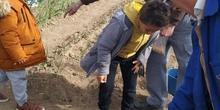 1º de Primaria_Plantamos garbanzo  3